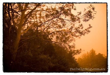 DustStorm_StreetTrees