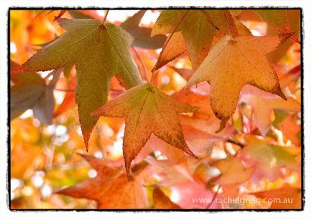 RachelGreig_AutumnDays
