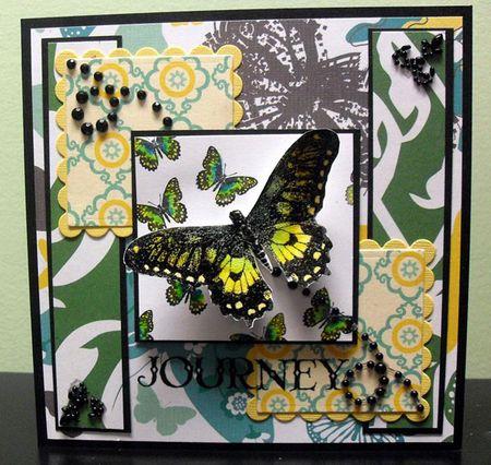 DDRS025_Butterflies_ErikaTaylor