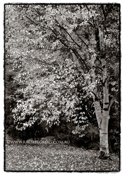 Tree_RachelGreig