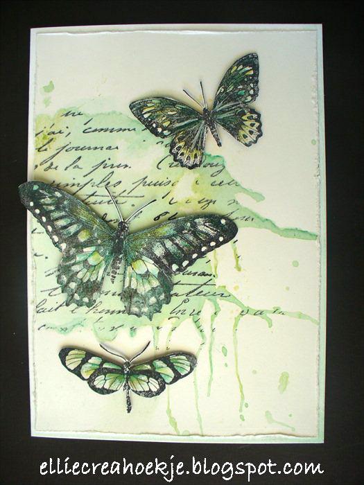 Groengeel-DD-vlinder-(1)