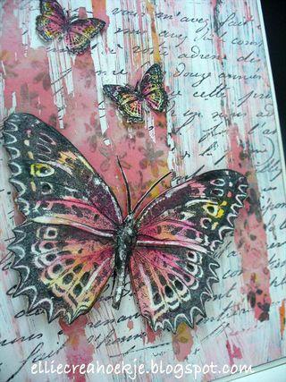 Roodgeel-DD-vlinder---(2)