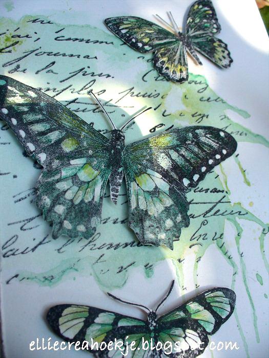 Groengeel-DD-vlinder-(2)