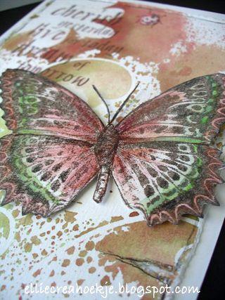 Roodgroen-DD-vlinder---(3)